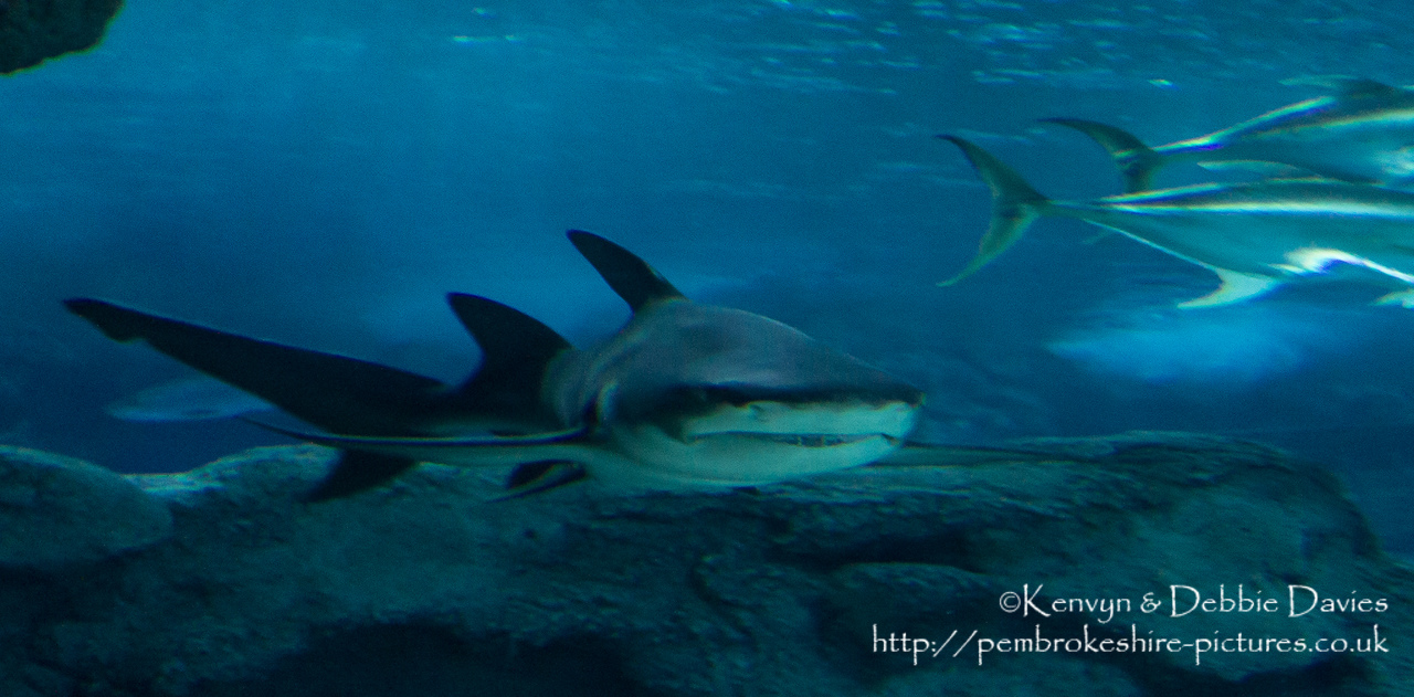 Blue Planet Aquarium has over 100 aquatic exhibits including a lot of sharks (Europe's largest caotive collection).