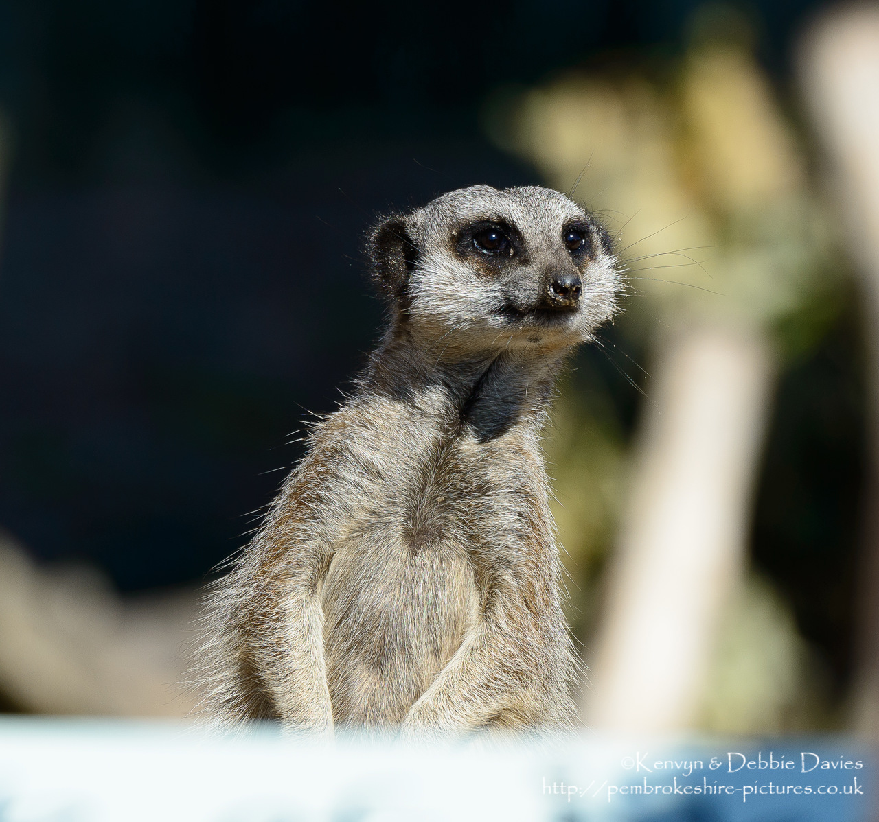Taken at Manor House Wildlife Park near Tenby, Pembrokeshire