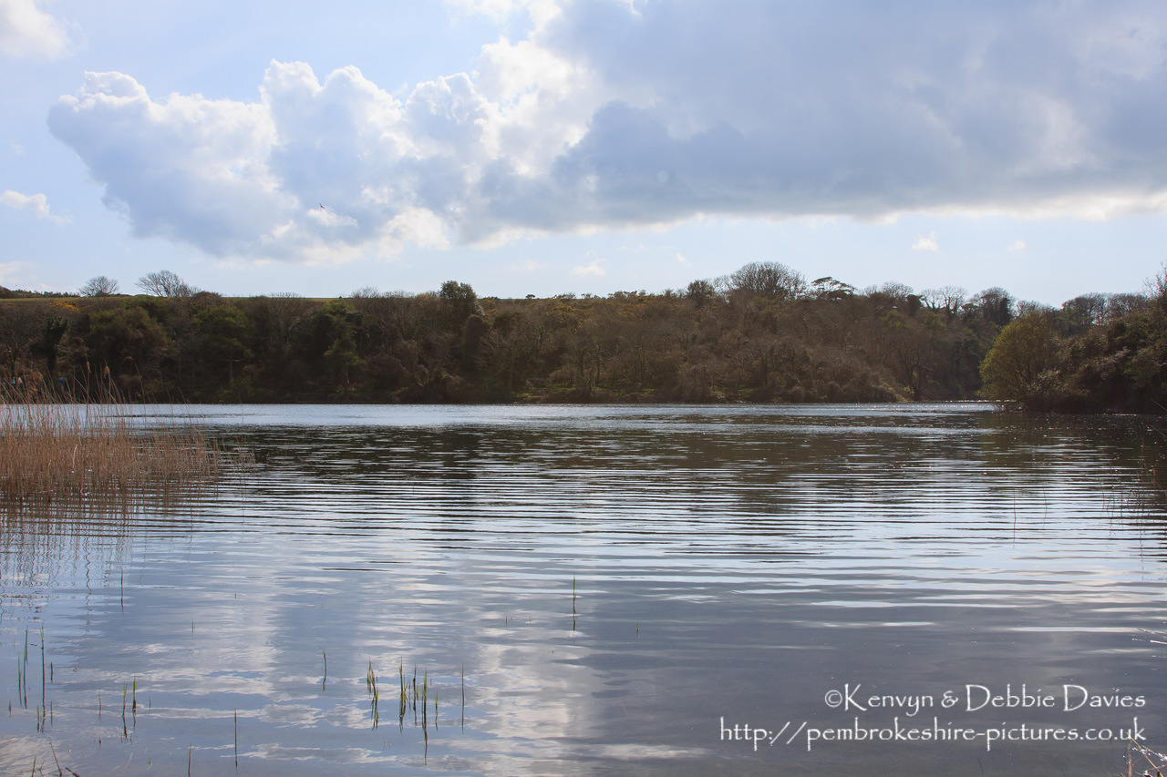 Bosherston Lilly Ponds, South Pembrokeshire. Formed in the 19th Century when Stackpole Estate blocked 3 valleys.