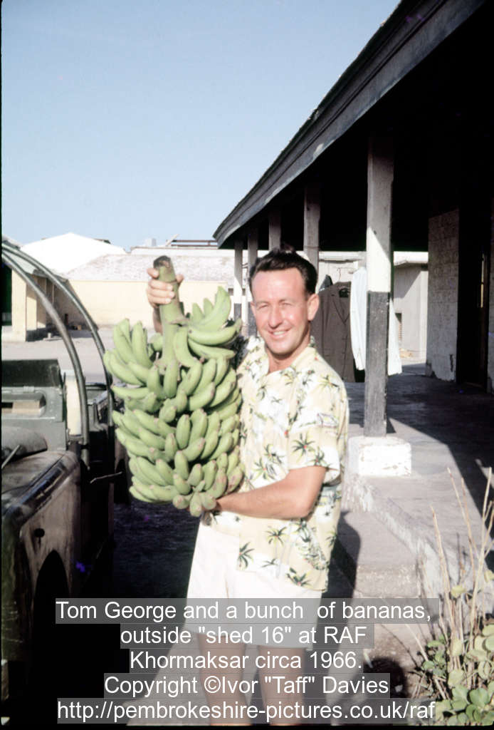 Tom George and a bunch  of bananas, 