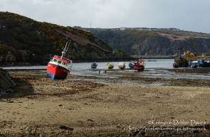 Lower Fishguard in Spring