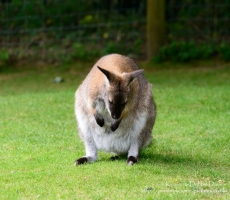 Manor House Wildlife Park