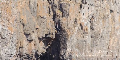 Sea Cliff Climbing at St. Govan's Head, Castlemartin, Pembrokeshire