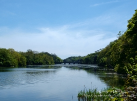 Eight Arch Bridge in Stackpole, Pembrokeshire