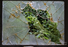Broken glass at Bosherston Lily Ponds