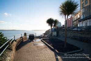 Palm trees in Tenby
