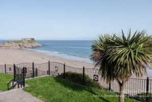 Palm Tree overlooking South Beach, Tenby, Pembrokeshire