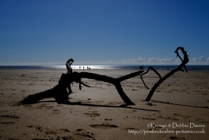 Driftwood on Swansea Beach
